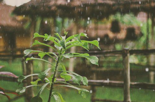 Hoe verkrijg je proper regenwater?